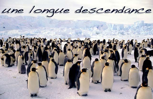 UNE_LONGUE_DESCENDANCE